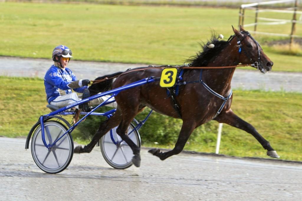 Talentet Champione Center har en bra sjanse i finalen av dagens jackpotomgang. Foto Morten Skifjeld/Hesteguiden.com