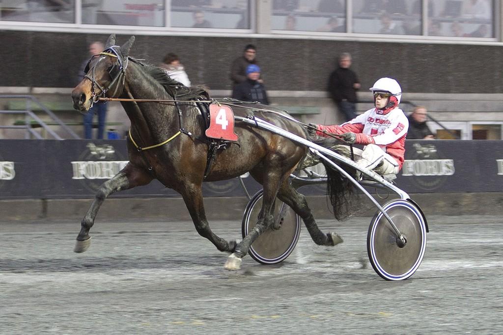 Nibley LB er en hest som kan overraske denne torsdagen. Foto: Anders Kongsrud/www.hesteguiden.com.