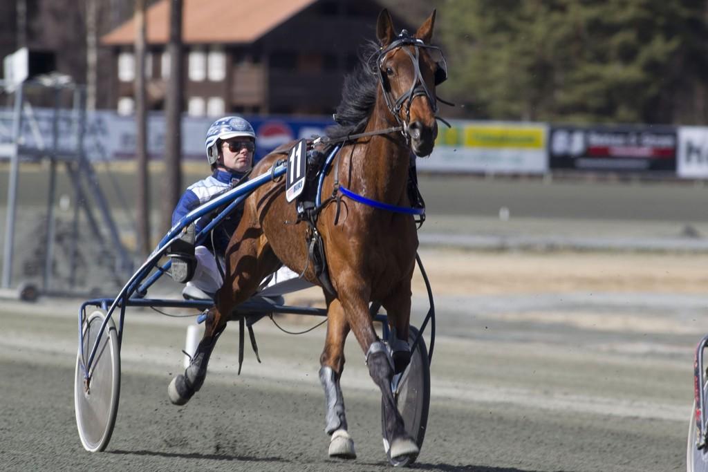 Tom Horpestad Preferencial blir meget spennende å følge i V65-6. _foto_Roger Svalsr¿d_hesteguiden.com