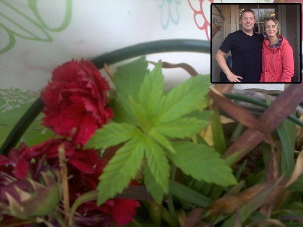 Thomas Lystad og Siri Nekstad Lystad fikk en cannabisplante på kjøpet da de handlet hengenellik hos Plantasjen i Kristiansund.