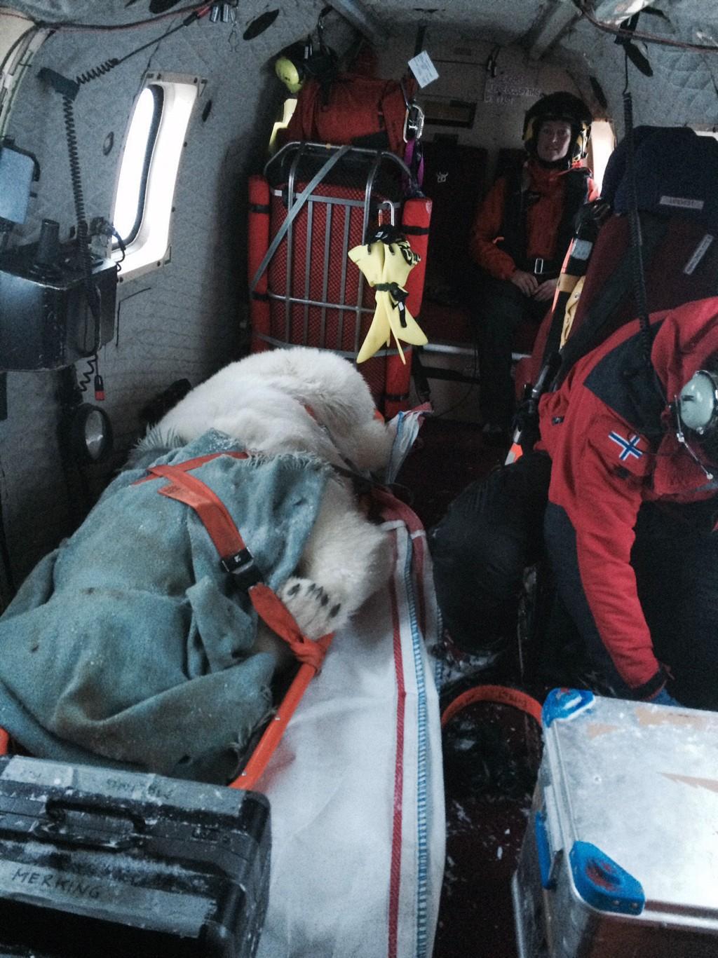 Isbjørnen som har oppholdt seg ved Longyearbyen siden onsdag morgen ble torsdag bedøvet og fraktet bort i helikopter.