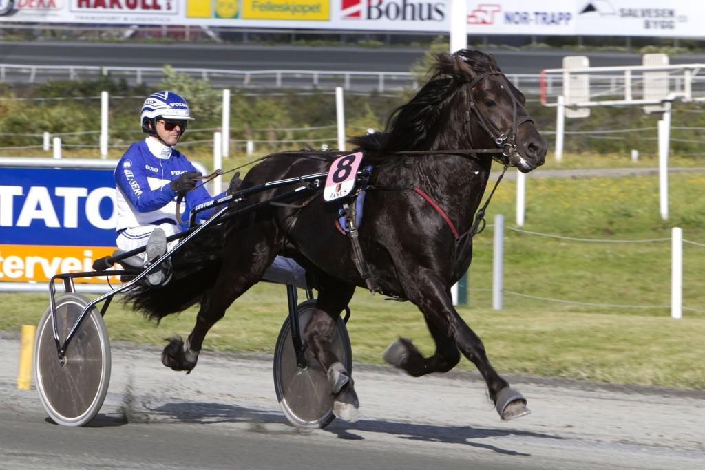 Pingo Ø.K. kan sørge for Norsk opptur i V64-finalen_Foto Morten Skifjeld/Hesteguiden.com