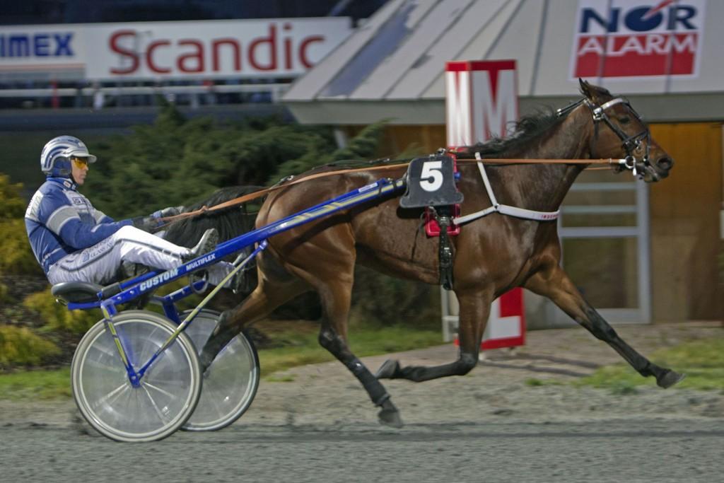Svein Ove Wassberg, og Independent O. har drømme betingelser foran seg på tirsdag _Foto Morten Skifjeld/Hesteguiden.com