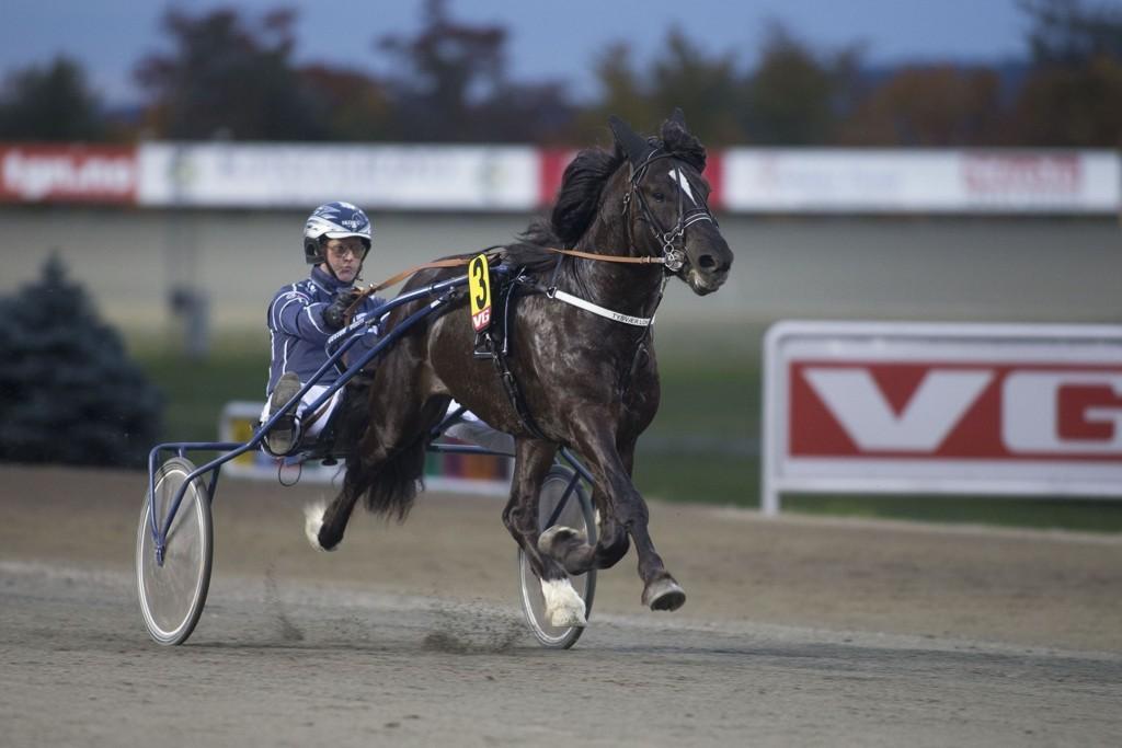 Flotte Tysvær Loke er en ny hest fra Team Tjomsland med et enormt talent. Vi banker. Loke_foto_Roger Svalsr¿d_hesteguiden.com