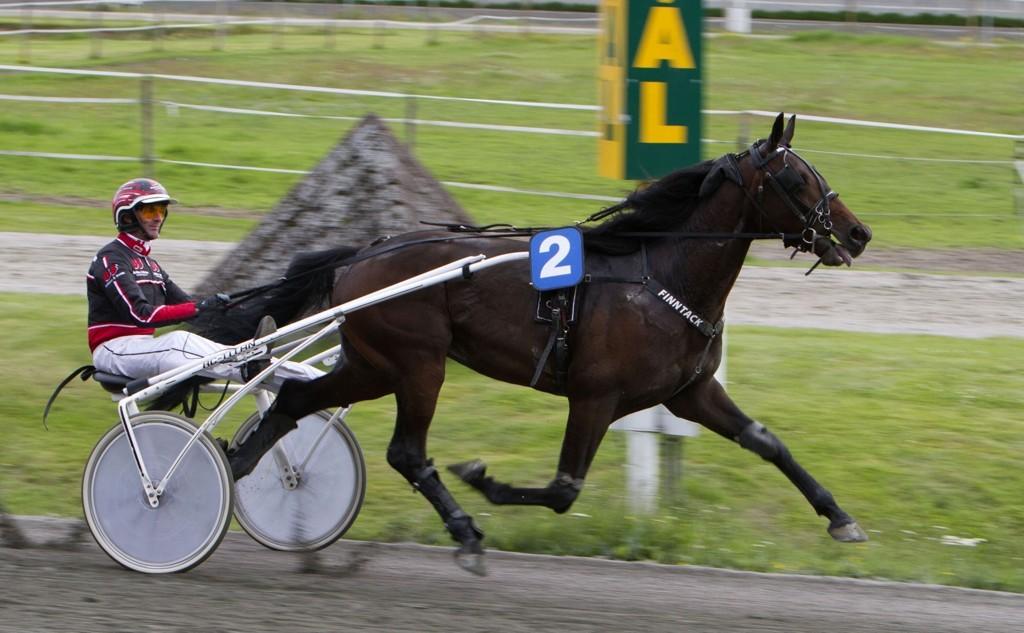 Midnight Plane, og Gunnar Austevoll er en av flere luringer denne fredagen. _Foto Morten Skifjeld/Hesteguiden.com