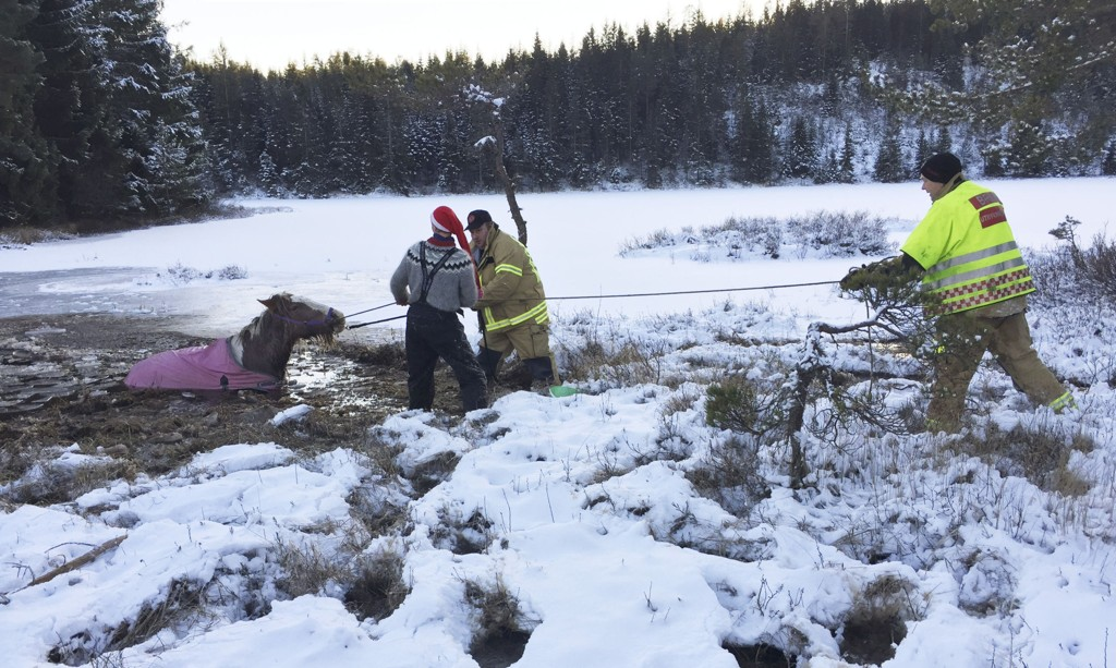 To hester, en hoppe og et føll, gikk 1. juledag gjennom isen på Mosfjelltjønn i Birkenes kommune. Redningsmannskaper som kom til fikk trukket hestene ut av vannet og gjennom gjørma og inn på sikker grunn.