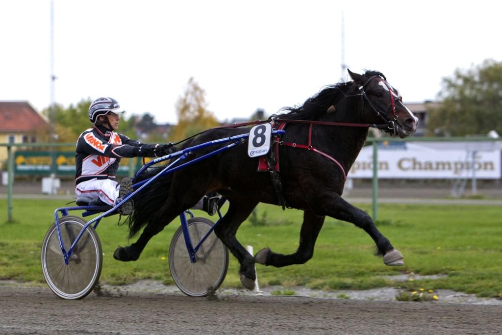 Tor Wollebæk, her med Fjord Jerven, blir vår banker i V75-spillet fra Biri_Foto Morten Skifjeld/Hesteguiden.com