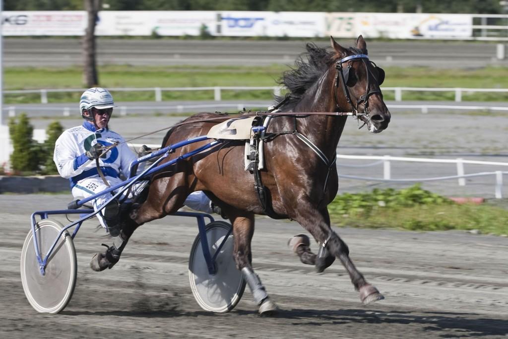 HC Holm kjører vår frekke banker fra Harstad denne søndagen. foto_Roger Svalsr¿d_hesteguiden.com