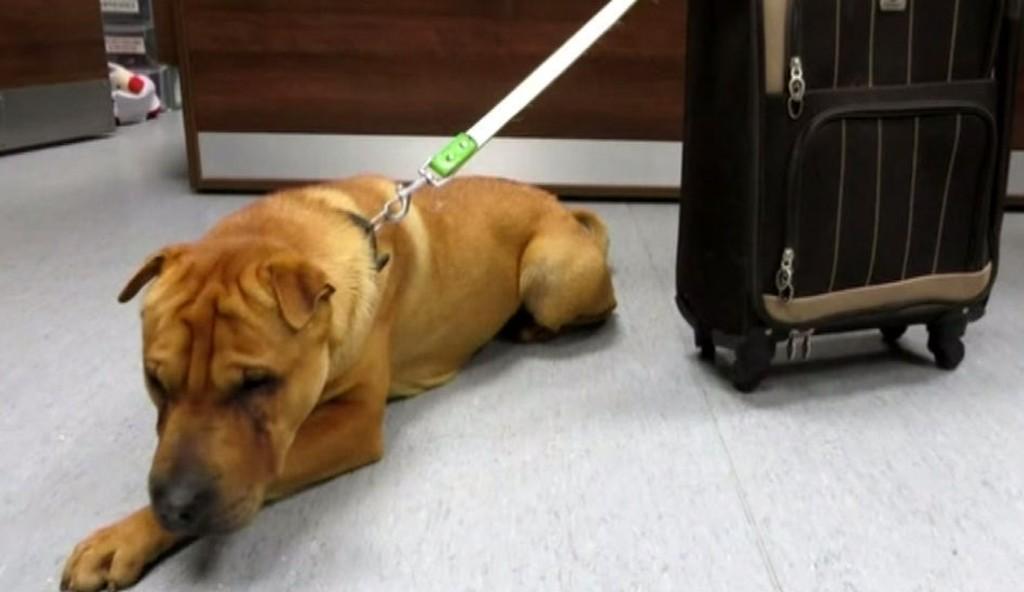 Hunden Kai ble funnet forlatt på togstasjonen Ayr i Skottland.
