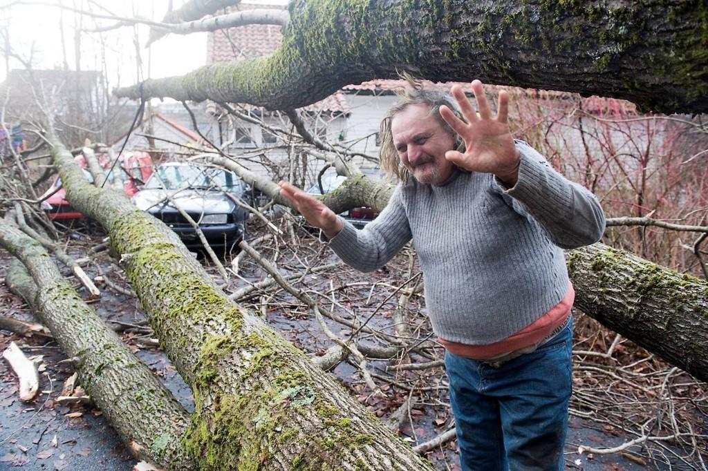 STORT: Sverre Østmark våknet til at to av bilene hans var smadret av et gigantisk tre.