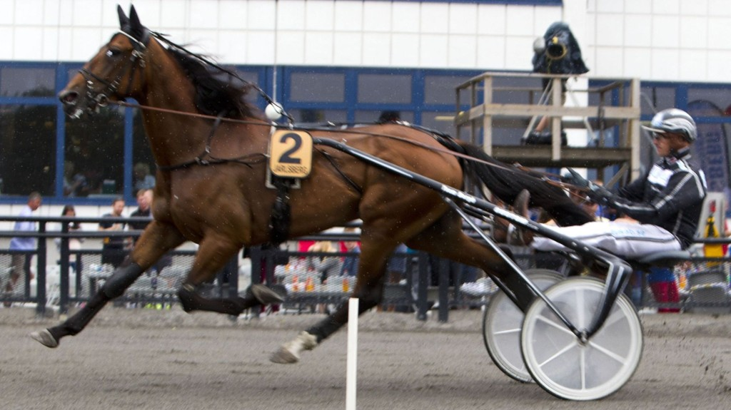 Robert Bergh er som vanlig i fokus når løpene kjøres på Bergsåker. Foto Morten Skifjeld/Hesteguiden.com