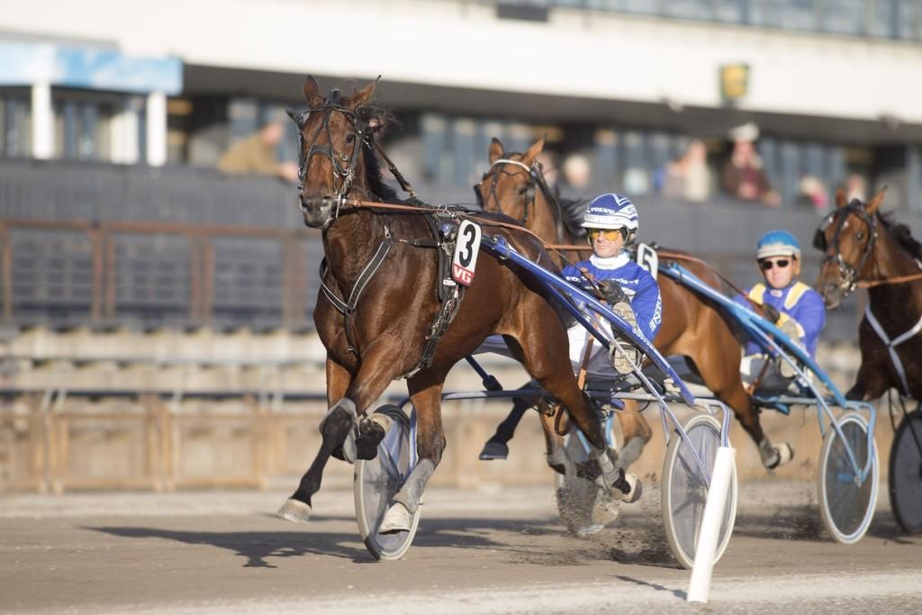 Lady Florence blir kjørt av Marius Høitomt denne søndagen. Dette er vår V65-banker. foto_Roger Svalsr¿d_hesteguiden.com