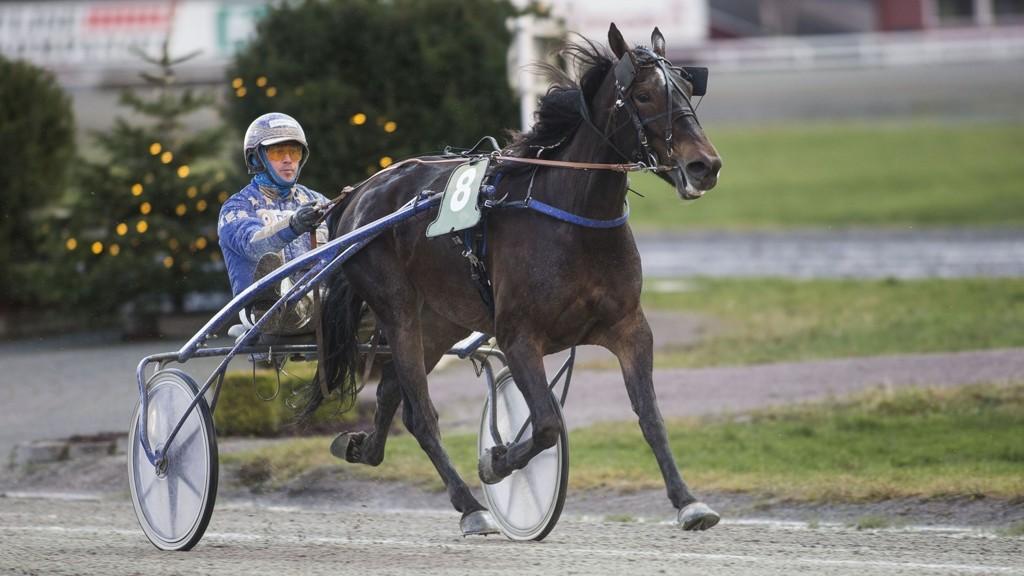 S.T.C.C. Faksa tar turen over grensen for å glede eier Morten Langli_foto_Roger Svalsr¿d_hesteguiden.com