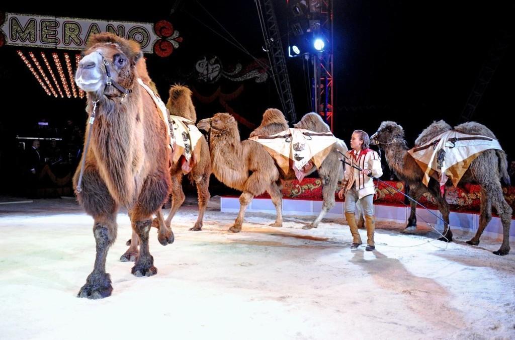 AVLYSES: Mange har protestert mot sirkusets bruk av elefanter. Men sirkusdirektøren avviser at dette har sammen heng med at de nå avlyser vårturnéen.