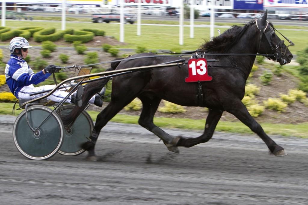 Svein Ove Wassberg dukker opp med en spennende hest denne torsdagen. Foto Morten Skifjeld/Hesteguiden.com