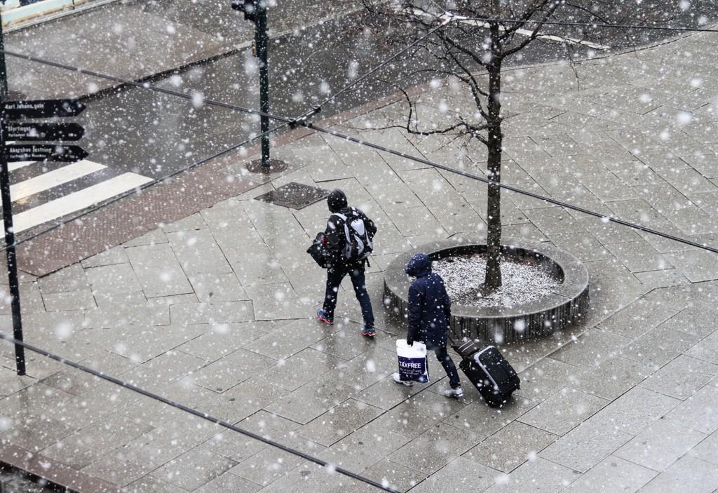 SNØ: Selv i Oslo kan det komme litt snø tirsdag, men det er snakk om bare små mengder. Dette bildet ble tatt i forbindelse med et snøfall i mars, da snøen ikke ble liggende.