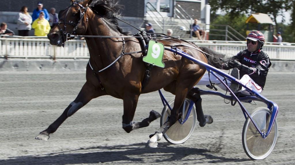 Geir Vegard Gundersen og Support Justice er favoritt til å vinne Olympiatravet på Åby lørdag._Foto Morten Skifjeld/Hesteguiden.com