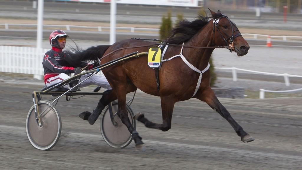Treårshoppa Darling Nikki imponerte i debuten og blir vår V5-banker i Drammen tirsdag sammen med Gunnar Austevoll.Foto: Anders Kongsrud/www.hesteguiden.com.