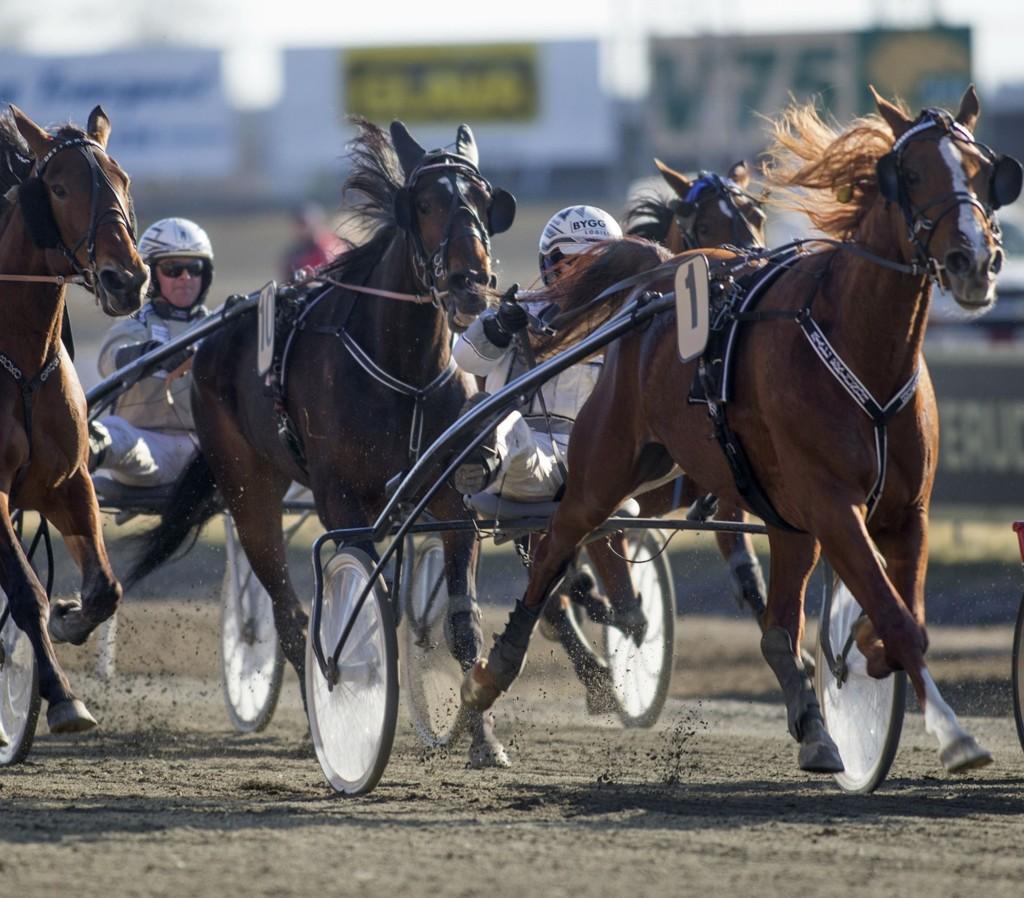 Andre Eklundh, her litt skjult bak 1 Miss My Money, er vår bankerkusk denne torsdagen.foto Roger Svalsrød hesteguiden.com