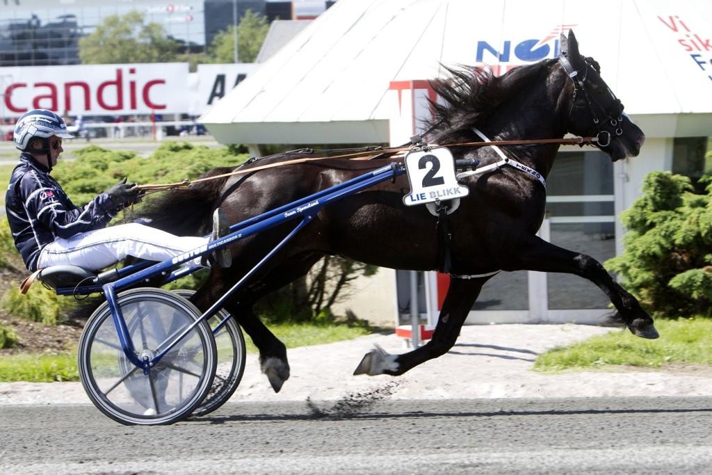 Tekno Odin og kusk Øystein Tjomsland har planer om å kjøre etter verdensrekorden i dag om forholdene tillater det. Foto: Charlotte Steine/www.hesteguiden.com.