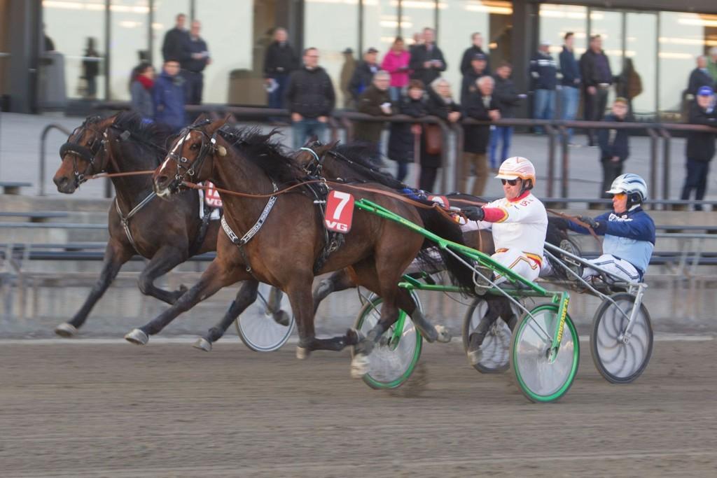 Tornerose Gardenia, og Hans Jørgen Eggen har et billig løp foran seg denne tirsdagen. Foto: Anders Kongsrud/www.hesteguiden.com.