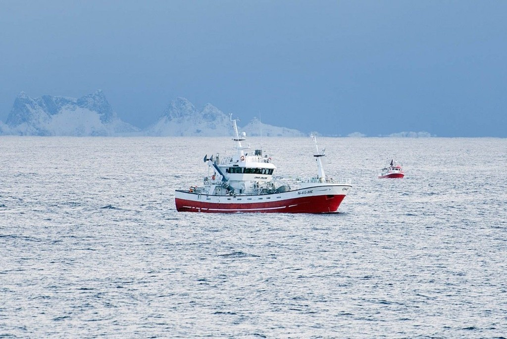Torsken har fått bedre leveforhold i det nordlige Barentshavet. Bestanden er stor og i høyeste grad kommersielt fiskbar, ifølge norske og russiske forskere.