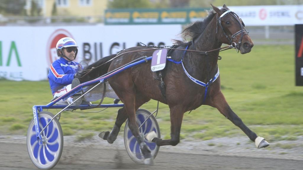 Martelle C.J. og Jomar Blekkan har en flott vinnersjanse i V5-2 på Leangen tirsdag.Foto: HM.Auran/hesteguiden.com