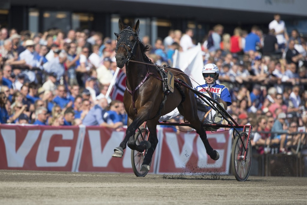 Jorma Kontio kjører vår ide i 3-årsløpet. Roger Svalsr¿d_hesteguiden.com