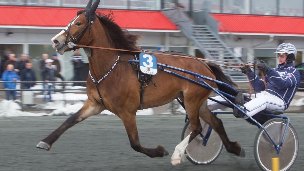 Gylden Jenta og kusk Øystein Tjomsland.Foto: Anders Kongsrud/www.hesteguiden.com.