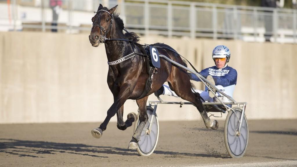 Frode Hamre med Bjerkespesialisten med Sejr Gammelsbæk.foto Roger Svalsrød hesteguiden.com