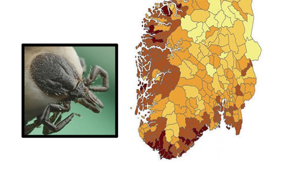 flått kart norge Dette er de norske flått fylkene flått kart norge