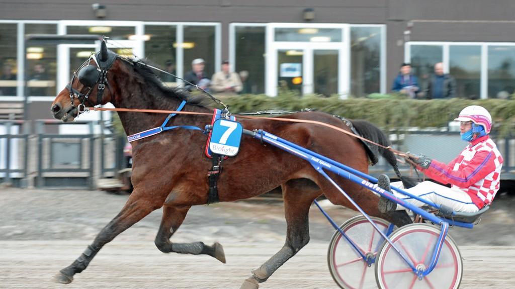 King Tilly og Claes Sjöström har en flott vinnersjanse i V4-2 på Visby tirsdag.foto : ck : king tilly sjstrøm claes