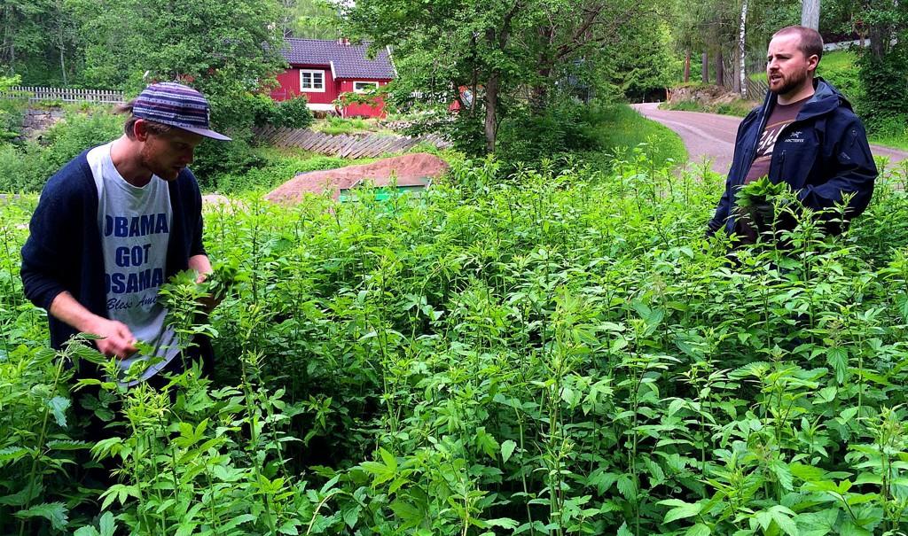 Urteplukker Gaute Vindegg (t.v.) og destillatør Dave Gardonio bryter med de fleste forestillinger av hvordan brennevin blir til. For Oslo Håndverksdestilleri er det skogsturer som utgjør det mest tidkrevende arbeidet.