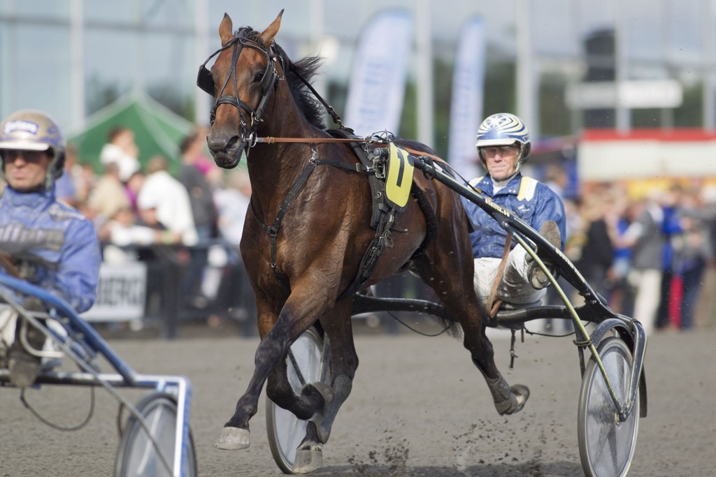 Stefan Melander kusker vår V75-banker på Halmstad torsdag. foto Roger Svalsrød hesteguiden.com