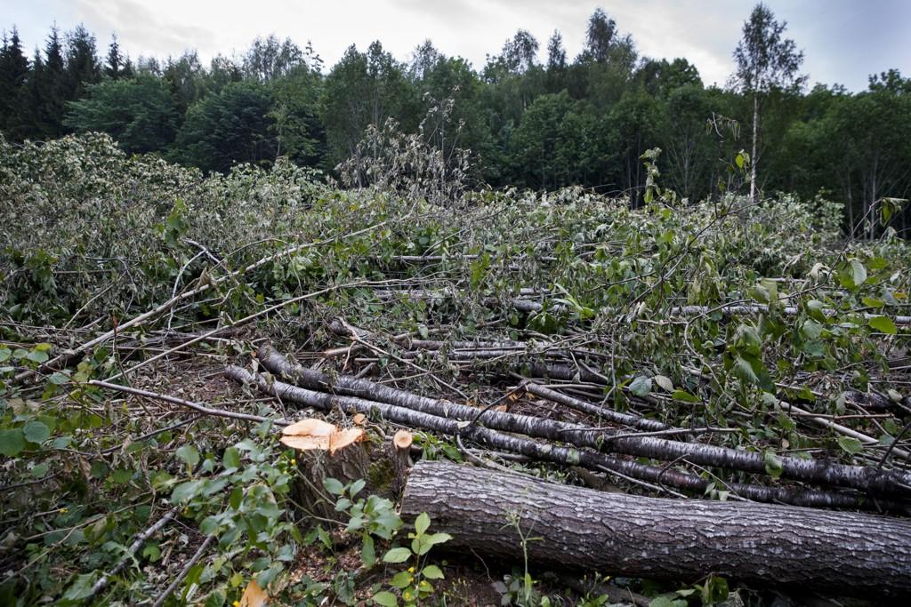 Et forholdsvis stort skogsområde på Skaugums eiendom øverst i Hvalstadåsen er blitt hogget ned.