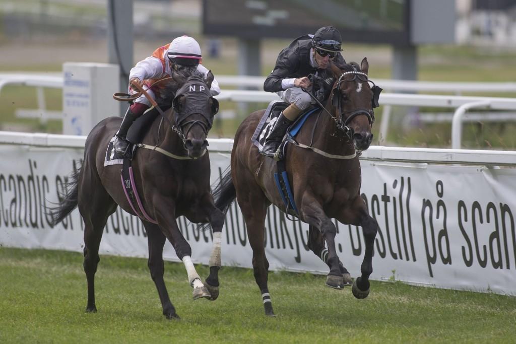 Vi tror på ny duell mellom Matauri, og Lord Of Trouble på torsdag. foto_Roger Svalsr¿d_hesteguiden.com