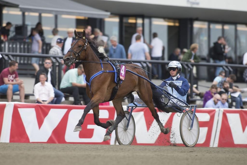 Gematria (Her med Frode Hamre) er bare en av flere hester fra Norge som skal ut på Axevalla denne fredagen. _foto_Roger Svalsr¿d_hesteguiden.com
