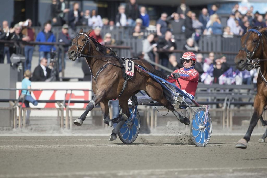 Åsbjørn Tengsareid får full tillit som dagens bankerkusk. foto_Roger Svalsr¿d_hesteguiden.com