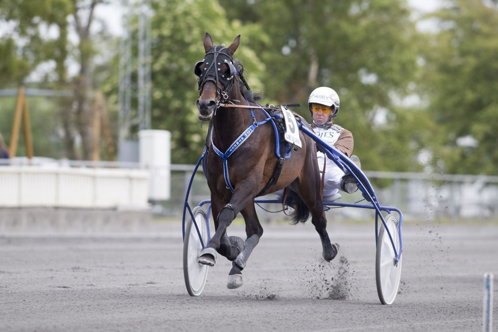 Cash Street, og Eirik Høitomt er V75-favoritten i den andre avdelingen. foto_Roger Svalsr¿d_hesteguiden.com