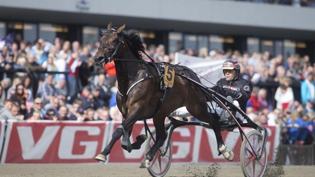 Support Justice, og Geir Vegard Gundersen, er store favoritter i årets NM. foto Roger Svalsrød hesteguiden.com
