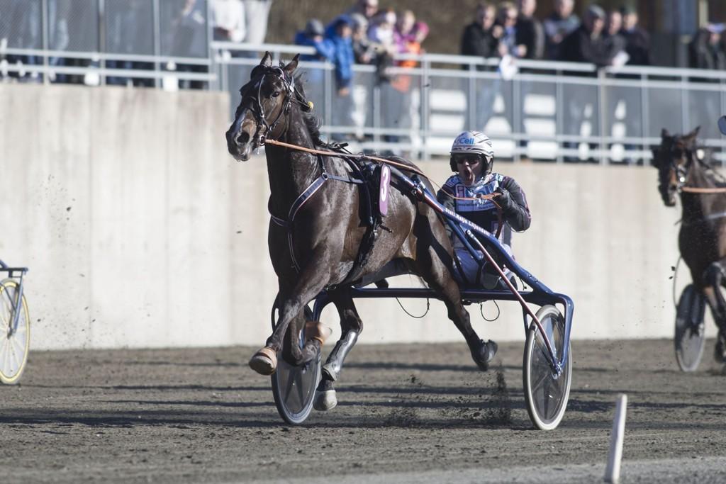 Ulf Ohlsson kjører vår frekke V65-banker på fredag. foto_Roger Svalsr¿d_hesteguiden.com