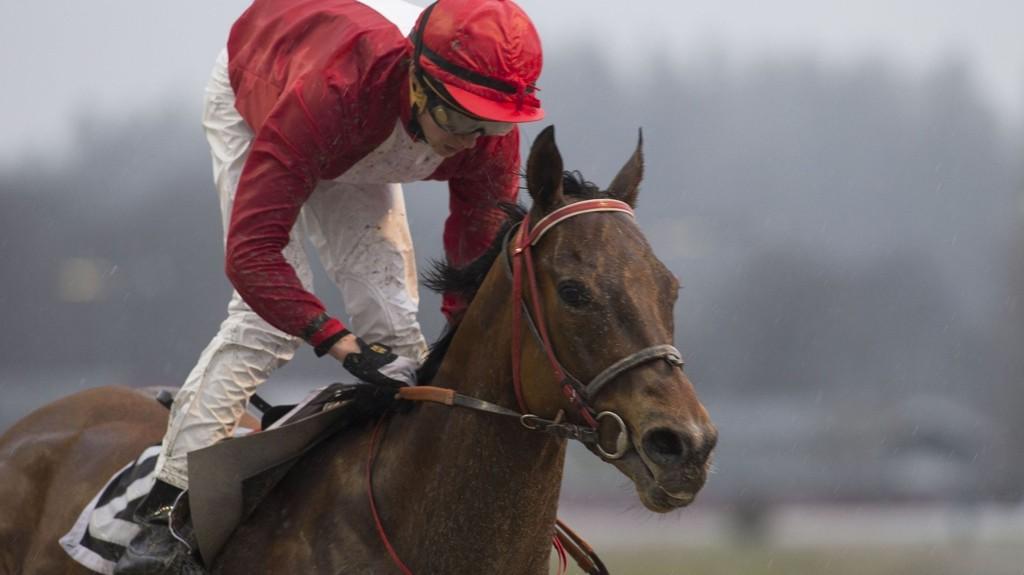 Marius Borgen Andersen (her fra et løp med Simian på Øvrevoll i fjor) rir Nettavisens V4-banker lørdag. foto Roger Svalsrød hesteguiden.com