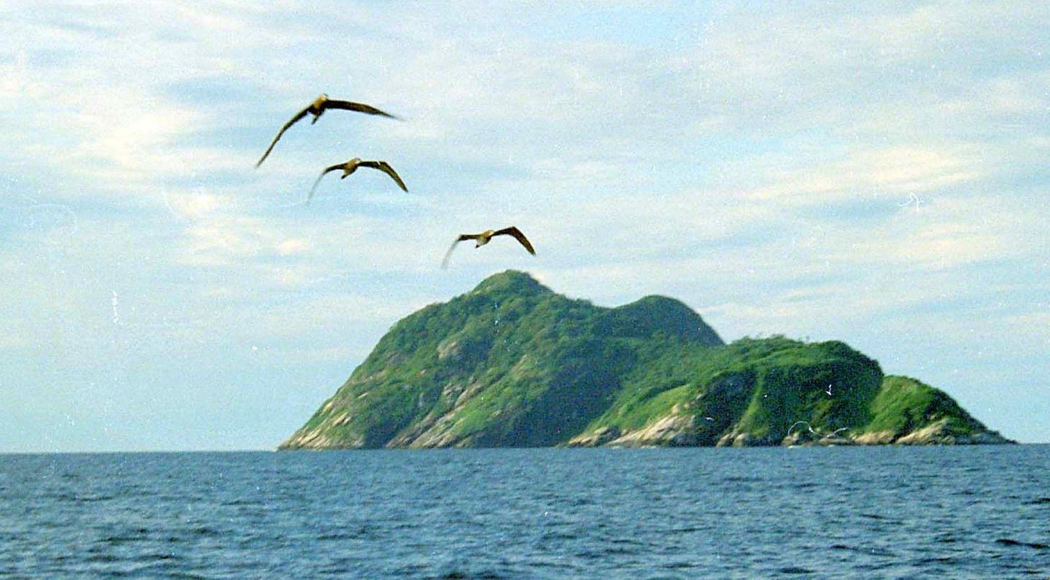 På øya Ilha de Queimada Grande bor det 4000 ekstremt giftige slanger.
