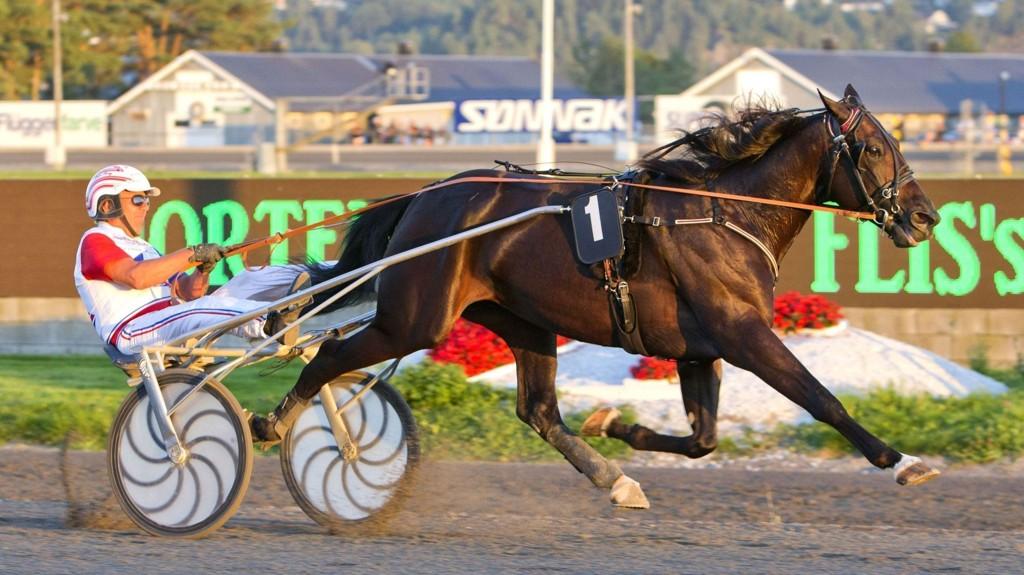 El Diablo B.R. imponerte i norgesdebuten på Jarlsberg sammen med Thor Borg. Foto Morten Skifjeld/Hesteguiden.com