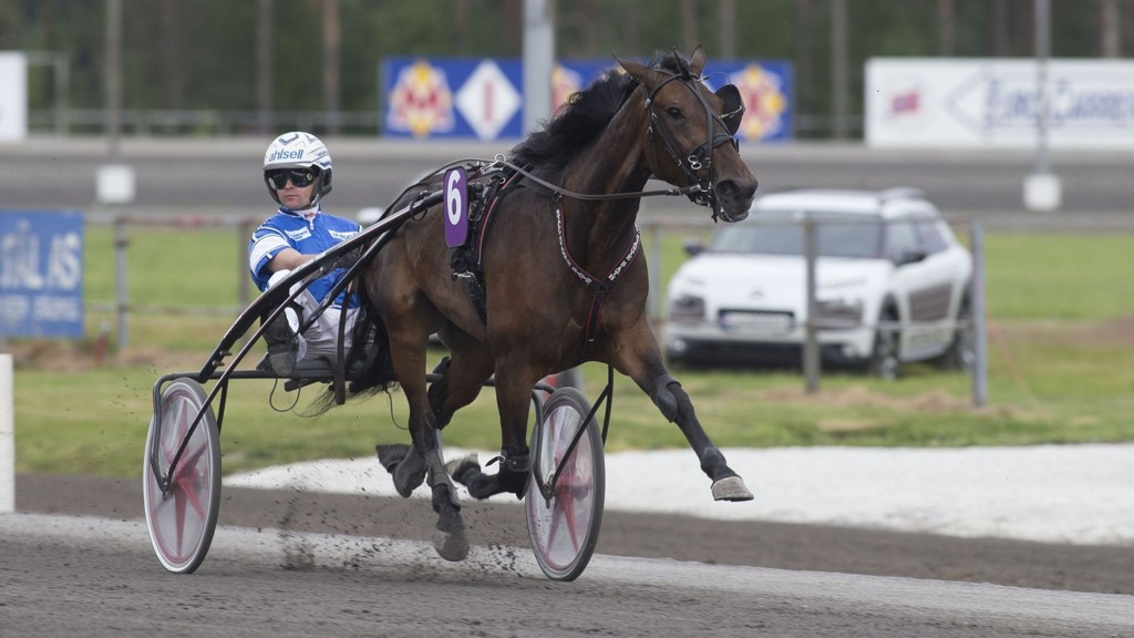 Erik Adielsson kjører dagens tyngste favoritt. foto_Roger Svalsr¿d_hesteguiden.com