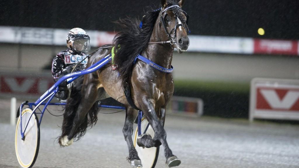 Ulf Ohlsson kjører en av våre luringer i Boden tirsdag. foto_Roger Svalsr¿d_hesteguiden.com