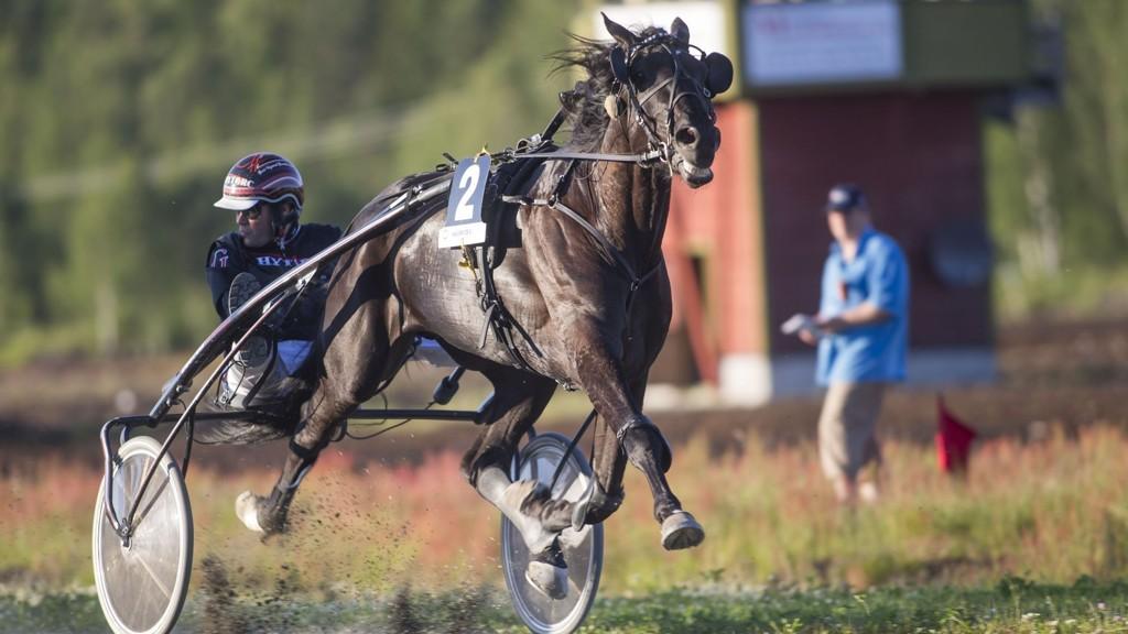 Audere Est Facere og Geir Vegard Gundersen blir stor favoritt i V75-2 på Klosterskogen lørdag. Foto Roger Svalsrød hesteguiden.com