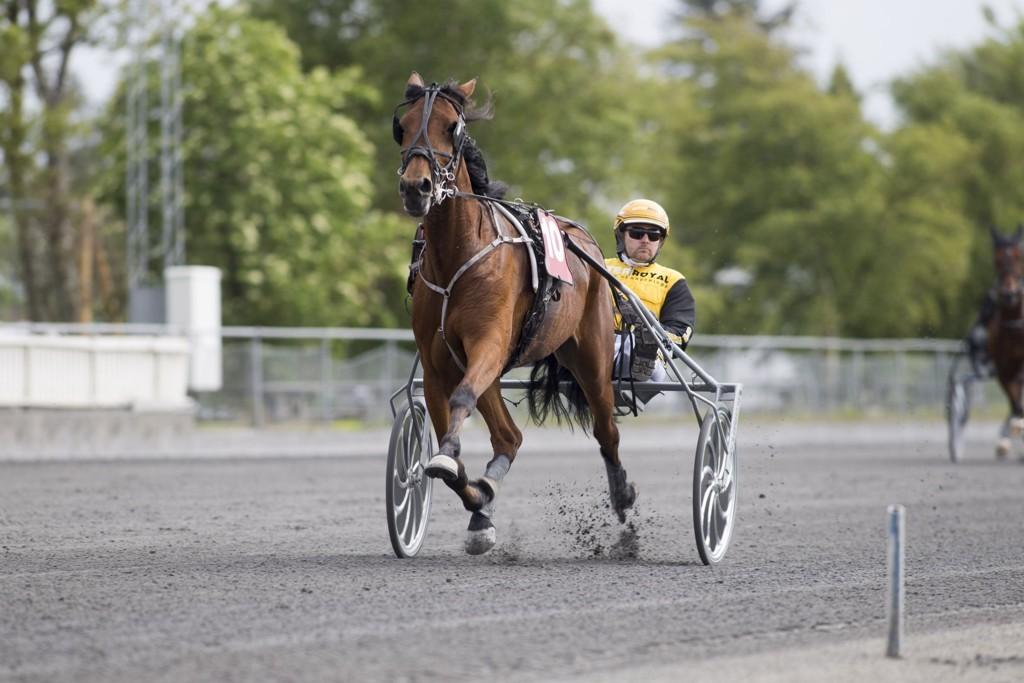 Jørn Bjaanes, og Baronesse Hooves har mange tilhengere i dagens jackpotomgang. _foto_Roger Svalsr¿d_hesteguiden.com