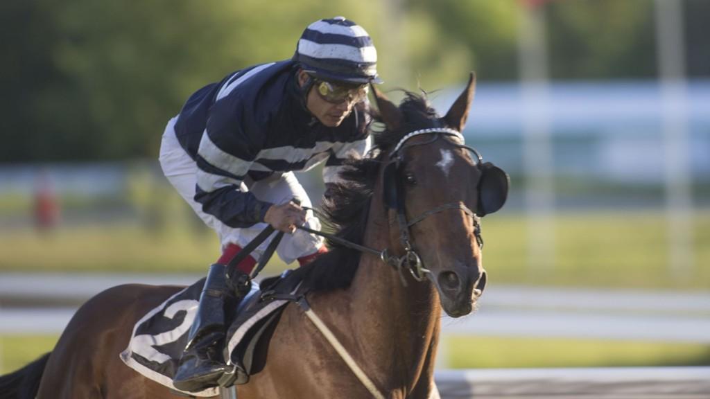 Spurtkanonen Priceless sammen med Carlos Lopez er en klar vinnerkandidat i V5-5/V4-3 på Øvrevoll fredag. Foto Roger Svalsrød hesteguiden.com