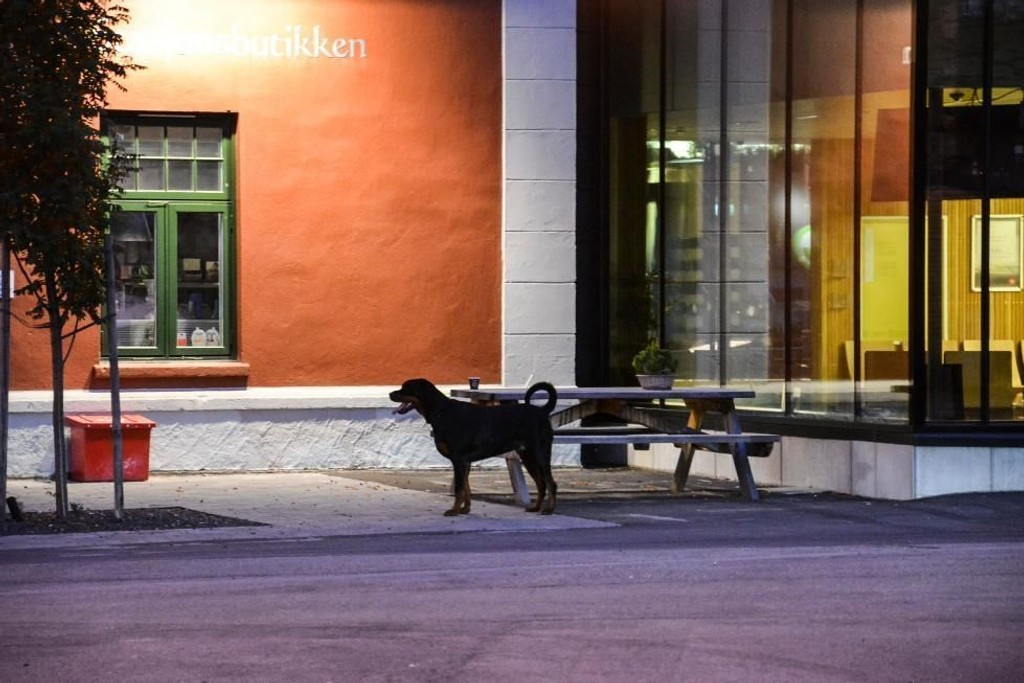 SKYSSTASJONEN AVSPERRET: En hund sto bundet utenfor Skysstasjonen torsdag kveld etter å ha bitt to personer. Politiet sperret av området. Foto: Cathrine Loraas Møystad (Østlendingen)